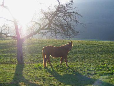 GrößenänderungPferd_Morgen.jpg