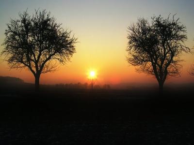 Bäume im  Paradies